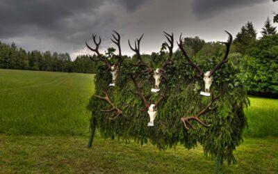 Výstava jeleních shozů – Uhřínov 2019
