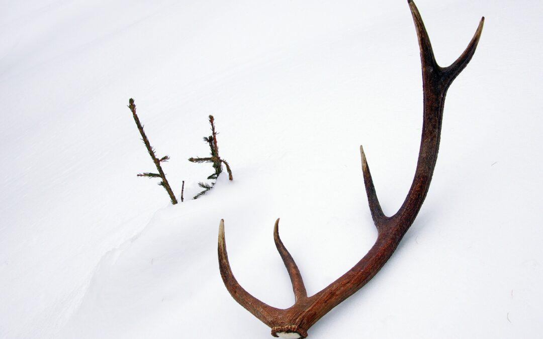 Pozvánka na přehlídku jeleních shozů